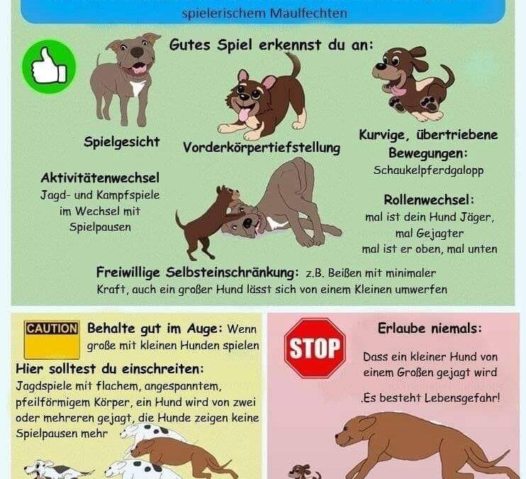 Spielverhalten unter Hunden