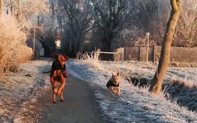 Mit dem Hund gut durch den Winter