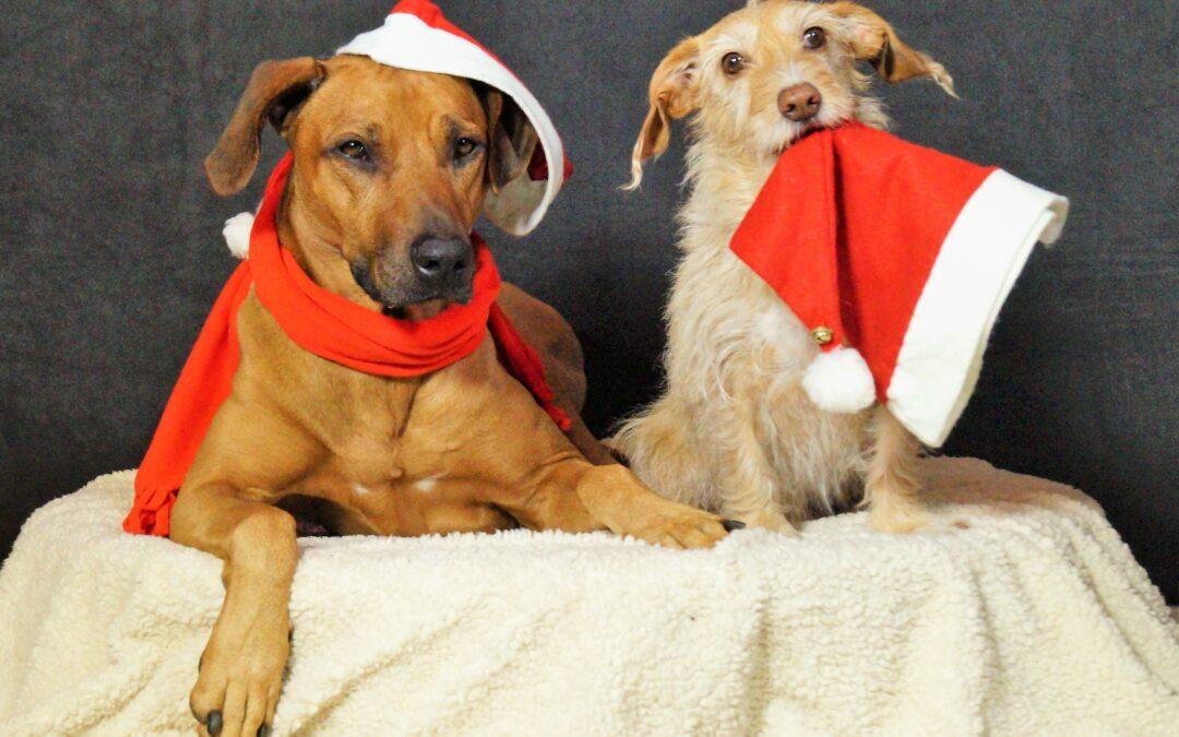 Tiere unterm Weihnachtsbaum